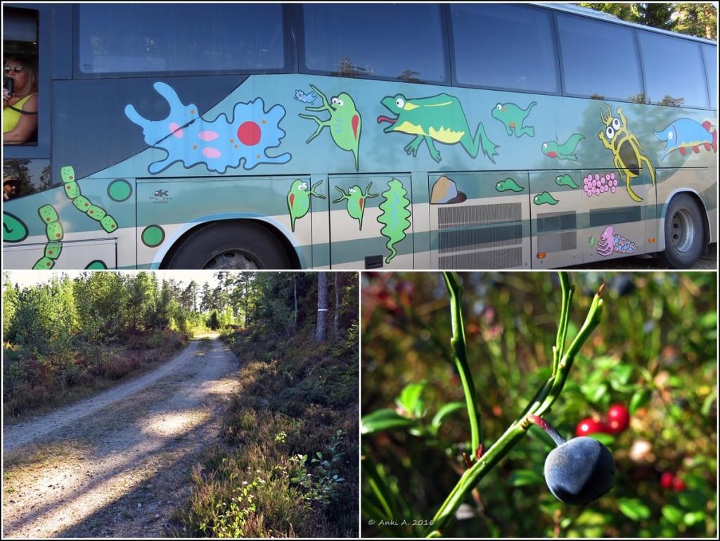 Ekoturens fina buss ... vid Fjällmossen 10 sep. 2016