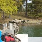 Okidevandringen på Kallsö, 20 maj 2012 002